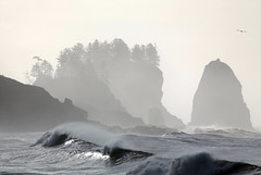 graveyard of the pacific (Vida Morkunas (seawallrunner)) Tags: ocean winter sea cliff usa mist storm cold water rock stone washington dangerous twilight waves pacific windy stormy spray maritime wa reef olympicnationalpark thirdbeach lapush seastack firstbeach blustery cwall werewolves whitecaps olympicnationalforest graveyardofthepacific stormseason jacobblack weatherchangesevery20minutes