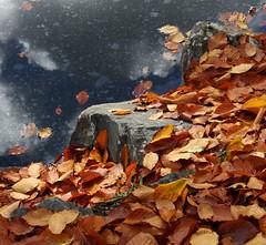 Au bord de l'eau (Yvan LEMEUR) Tags: nature automne mare lumière couleurs reflet etang végétation feuillesmortes