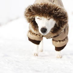 i'm at the beach, i'm at the beach :: 46/52 (sarah ...) Tags: winter dog snow cold jane jacket puffycoat diva pouting fashionable 4652 thelittledoglaughed 52weeksfordogs 115years getmetheefouttahere