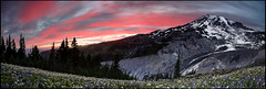 Pan the Rain (Vinnyimages) Tags: flowers sunset summer panorama mountain washington nationalpark paradise northwest pano mountrainier rainier cascades pacificnorthwest washingtonstate usnationalpark vinnyimages wwwvinnyimagescom vinnyimagescom