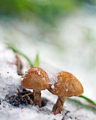 Why Smurfs Are Blue (Darrell Wyatt) Tags: winter house snow cold ice mushroom bokeh smurf icy whysmurfsareblue
