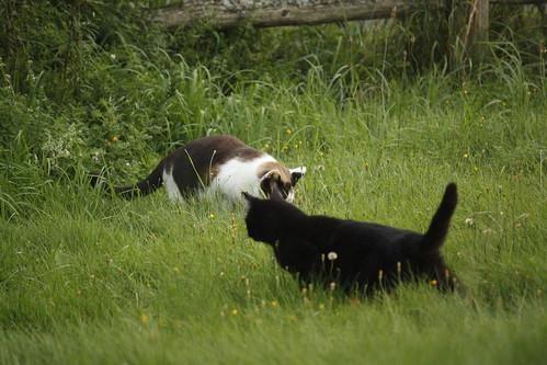 Zorro Stole Buddy's Mouse  9