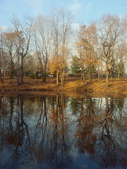 Autumn Light (margaret mendel) Tags: trees leafless endofseason walkinthepark lateafternoonlight vancortlandtpark reflectioninapond