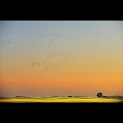 (rohaberl) Tags: germany crane cranes brandenburg linum top20colorpix top20colorpix20 saariysqualitypictures elitegalleryaoi aboveandbeyondlevel1