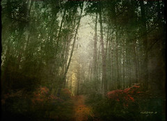El bosque nunca duerme ..  The forest never sleeps ... (tan.solo_milenia .) Tags: portugal bosque ourtime beyondclick artistictreasurechest