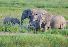 Elephant Family, Ruaha National Park