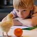 homework with a chicken by eren {sea+prairie}, on Flickr