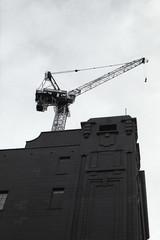 Cranes (Karan Kadam) Tags: 35mm canona1 film filmisnotdead filmphotography filmcommunity filmlook buyfilmnotmegapixels istillshootfilm blackandwhite people adelaide southaustralia analog