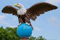 CE9I2860.jpg (Phil Hoops) Tags: wantagenj sussexcounty baldeagle trainstation castironeagle newyorkcity grandcentralstation newjersey animals newyork zoo spacefarms animal wantage unitedstates us