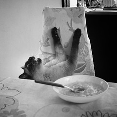 """""""No way I'm eating that!"""" (Ojo de Piedra) Tags: felines whiskers food fierce monochrome blackandwhite cute lovely dailylife family titin cats mexico mex"""