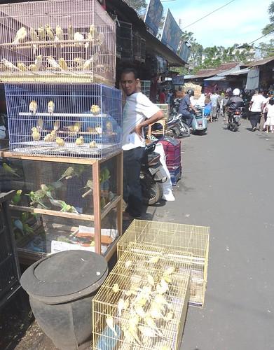 Java-Malang (12)