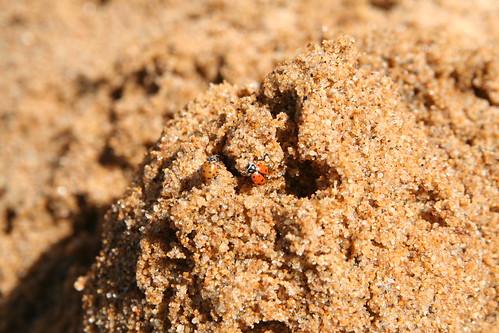 Rescued Ladybugs