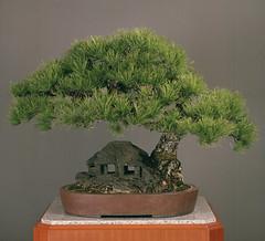 bonsai fertilizer