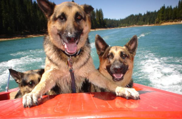 L_DogBoat