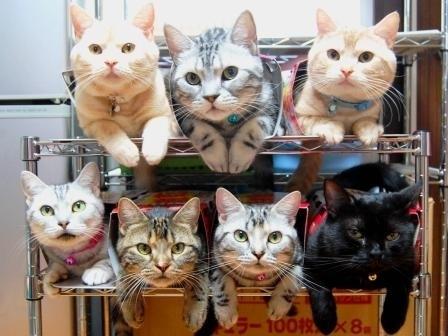 收納貓咪1