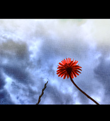 Today (Darren-Muir) Tags: blue red sky flower texture grass canvas single layers