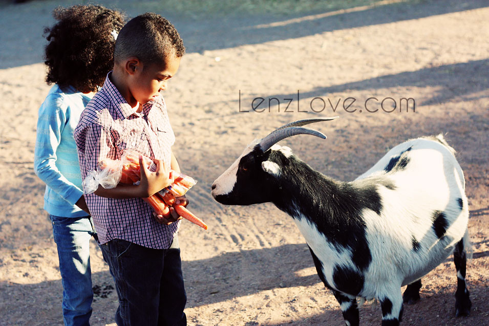 Goat#4