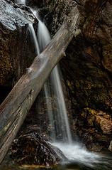 Descend (millagios) Tags: wood longexposure detail tree water river rocks stream descend flowing silky
