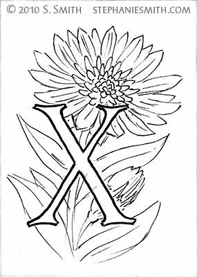 X is for Xeranthemum
