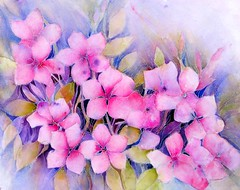 Vincas (Ani Kin) Tags: pink flower floral watercolor tropical watercolour teresita tropicalflowers floralwatercolor