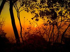 Hazy sky on sunrise (Bookriver..a little busy.) Tags: sky sun japan forest sunrise hazy   perfectsunsetssunrisesandskys
