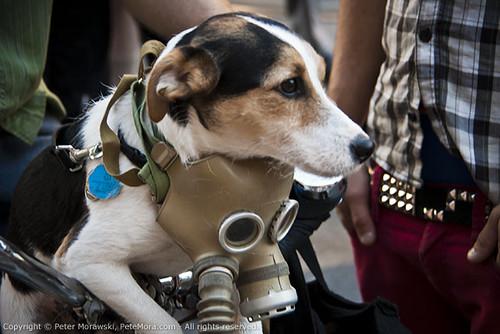 2010 Canada Day: Doggie Gas Mask