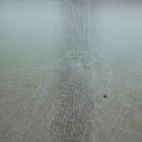 主のいないクモの巣