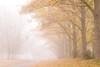 Winter Grove (Catching Magic) Tags: newzealand lake waikato tiraudan atiamuri