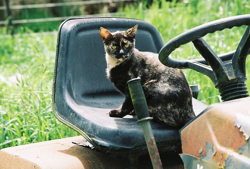Tortoise Shell Cat On A Tractor