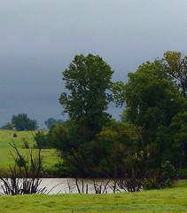 Small pond (penant) Tags: from trees mist storm water grass rain clouds kansas 123nature beautifulcapture treesinmist anaturallandscapesphotogroup flowerstreesfoliage screamofthephotographer