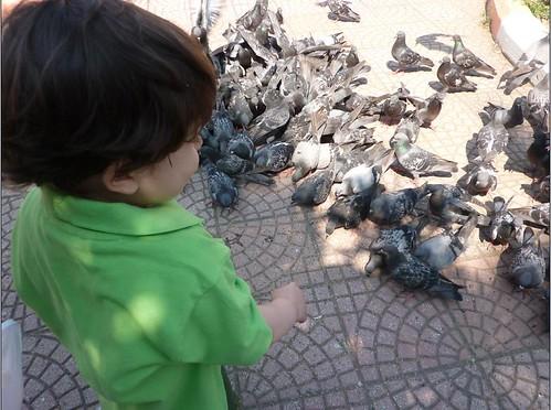 kuşlar2