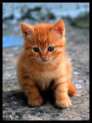 Hi Life ...! (Street Kitten) / Merhaba Hayat ...! (Celalettin Gne) Tags: color macro beautiful leaves animals closeup cat turkey nikon kitten trkiye turquie trkorszg trkei sheet makro kedi turqua turchia gzel  tirkiye turkei turcja  renk yaprak renkler  turki tekir  kediyavrusu mrnav sokakkedisi yaknekim streetkitten   turchiacelalettingne wwwgunesgentr wwwgnegentr