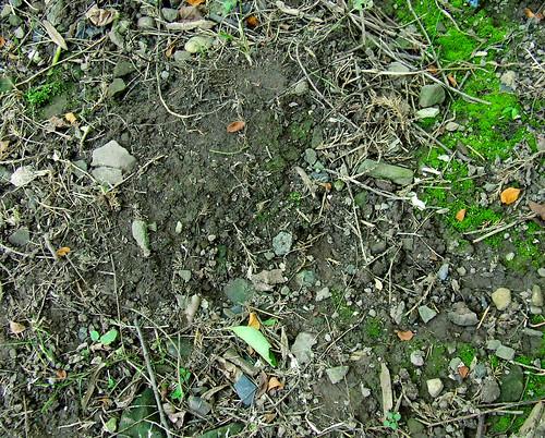 moss garden 2