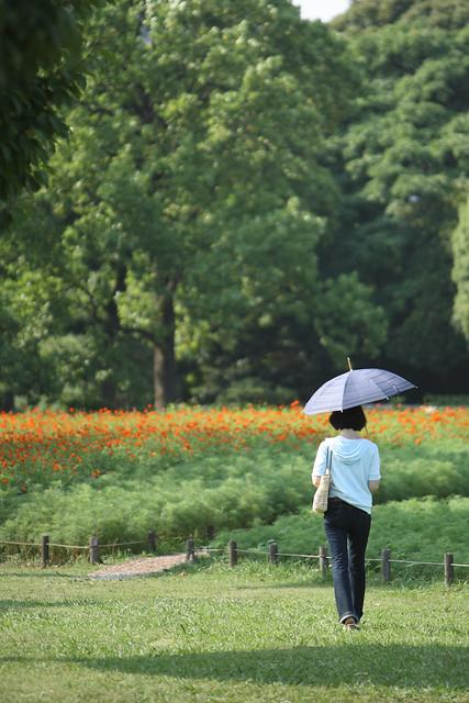 林間の花畑