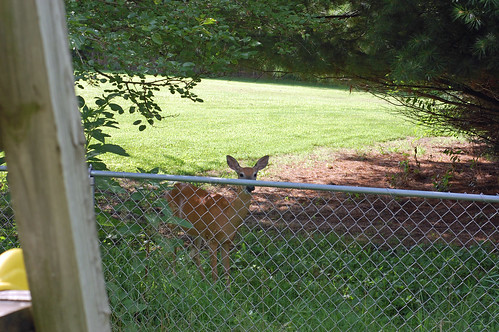 71010 Deer 01