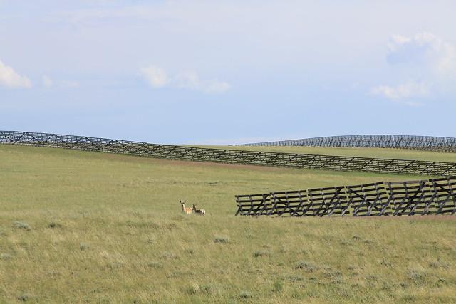 Prairie scenes