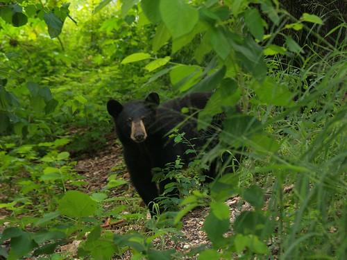 Fauna silvestre y conflictos con el humano I