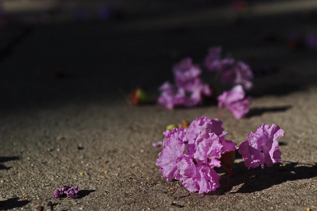Sidewalk Blooms