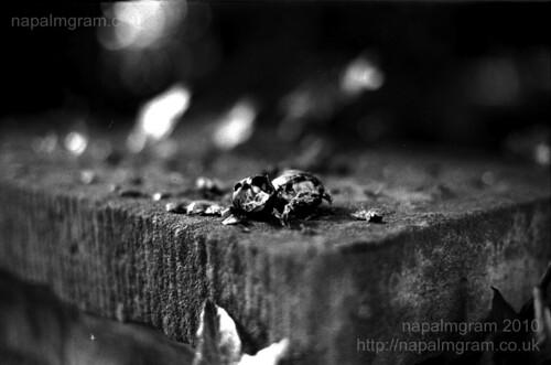 Seed on brick