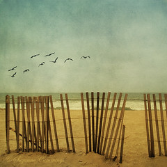 Nine in the Sky (SLEEC Photos/Suzanne) Tags: ocean texture beach pelicans fence surf huntingtonbeachcalifornia magicunicornverybest happyfencefriday shadowhousecreationstexture