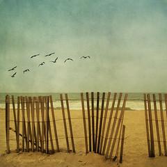 Nine in the Sky (SLEEC Photos/Suzanne) Tags: ocean texture beach pelicans fence surf huntingtonbeachcalifornia magicunicornverybest happy