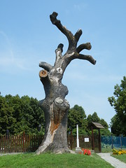 Rákóczi tree