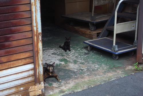 Today's Cat@2010-07-20