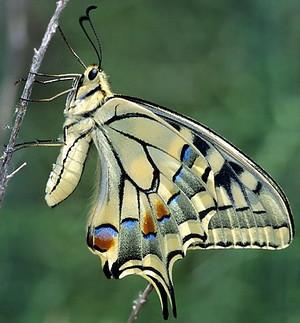 Pillangó szentély: Lepke fajok