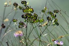 wildflowers 121