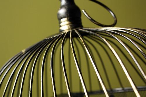 Bird cage03