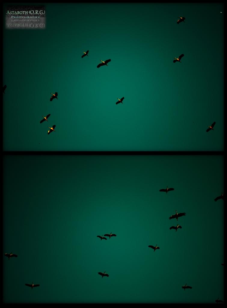 Cigüeñas a Granel