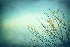 There is no blue without yellow and without orange. (CarolynsHope) Tags: blue color texture colors leaves yellow leaf colorful aqua branch teal branches textures twigs skeletalmess carolynshope