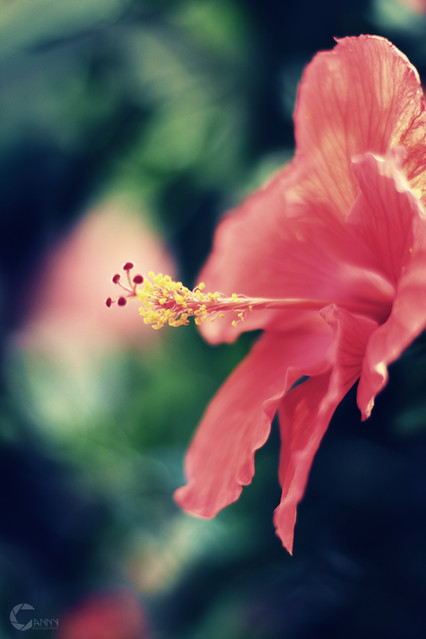 BradySt_Flower