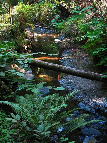 muir-woods-IMG_5155